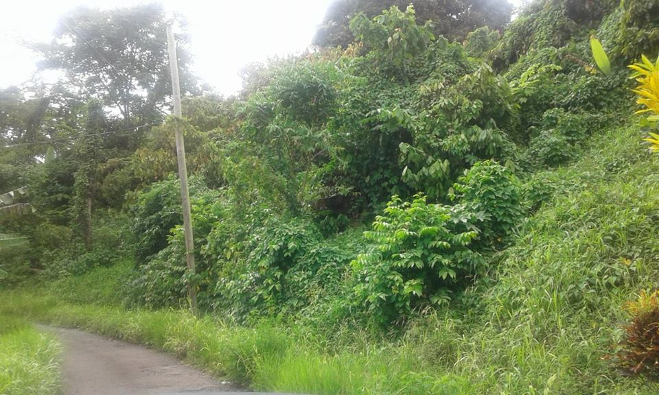 Affordable  Land For sale In St David's